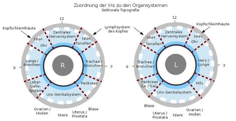Sektorale Topographie der Iris