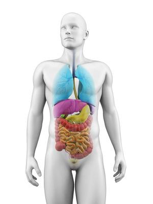 VEGACHECK der inneren Organe