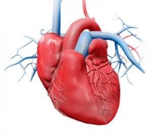 Ihr Herz in 3D mit Hilfe der Cardiogoniometrie